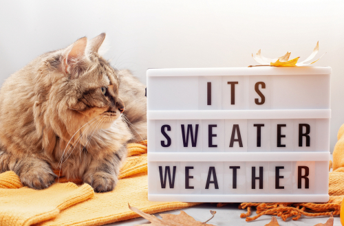 Lightbox with the text It's Sweater Weather